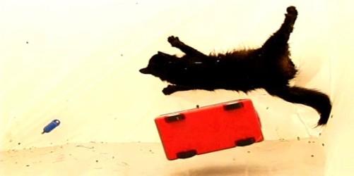 El gato ´Porculpa´ se contorsiona en ingravidez. Si quieres ver el vídeo de Lyn Hagan, puedes hacerlo en su página web.